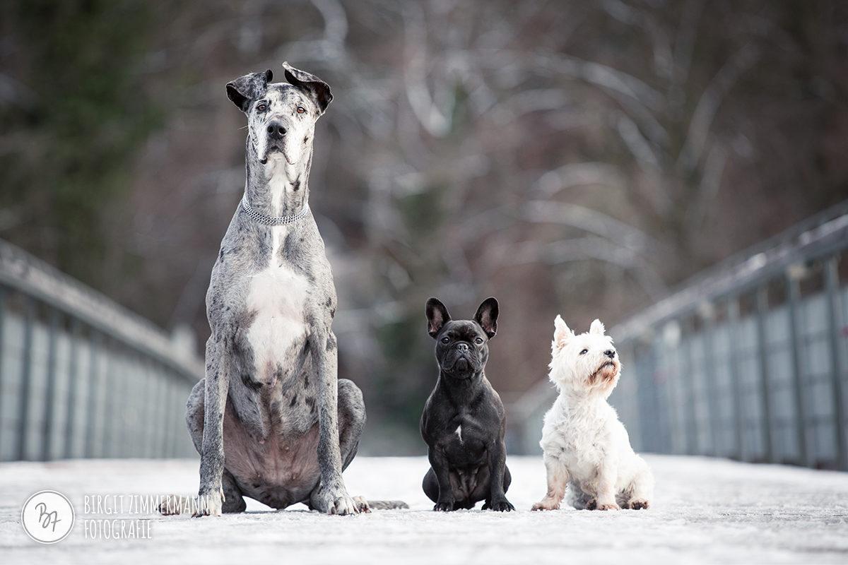 hunde-isarbruecke-trio