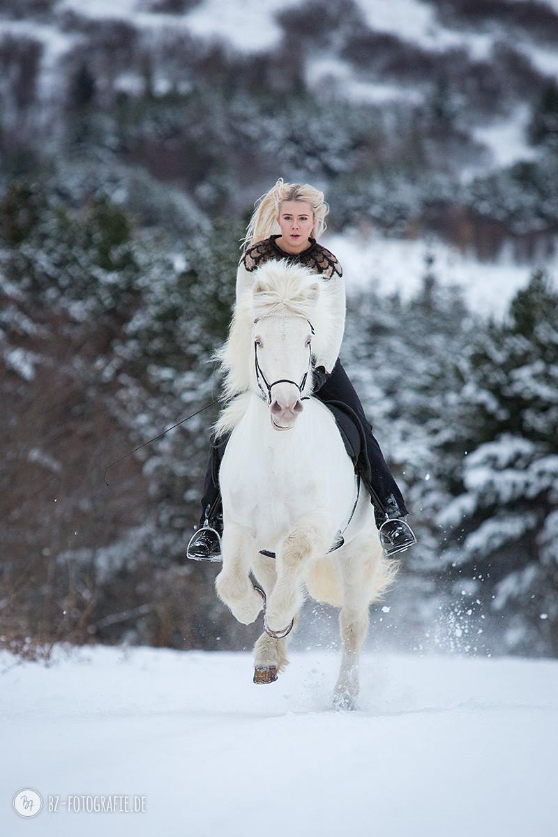 islandpferd-albino-geritten-schnee-007