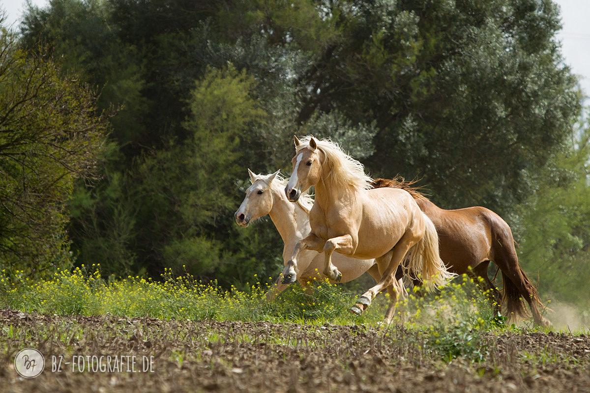 fotoreise-jerez-001-pferde