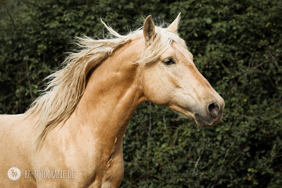 fotoreise-jerez-012-pferde