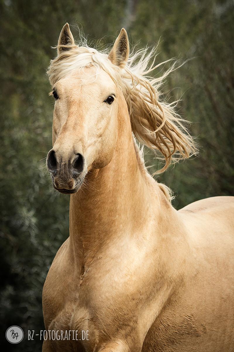 fotoreise-jerez-013-pferde