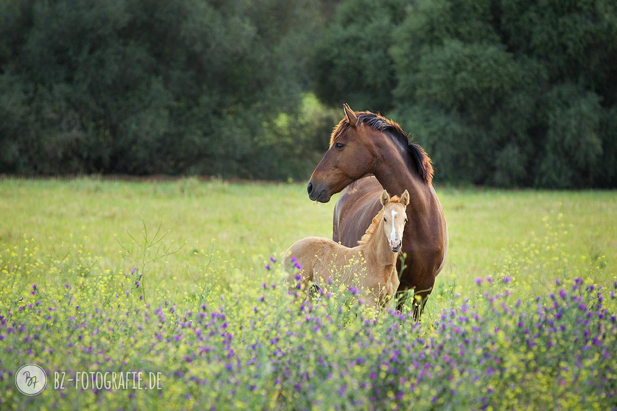 fotoreise-jerez-031-pferde