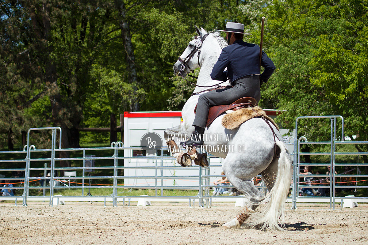 working-equitation-em-2016-052