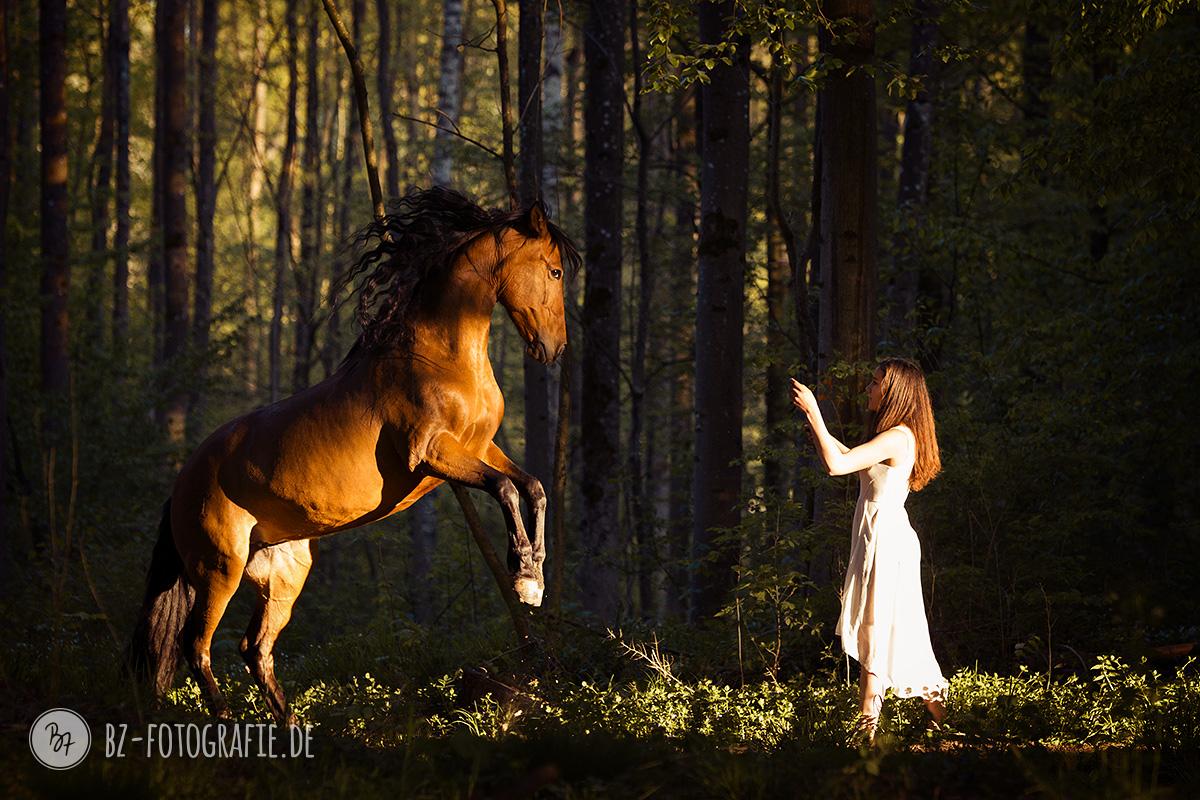 Fotosession: Freiheitsdressur Smit steigendem Pferd im Wald