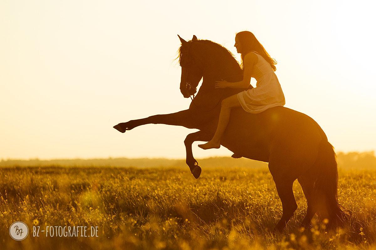 Fotoshooting mit Dancinghorses - Steigen im Sonnenuntergang | BZ Fotografie