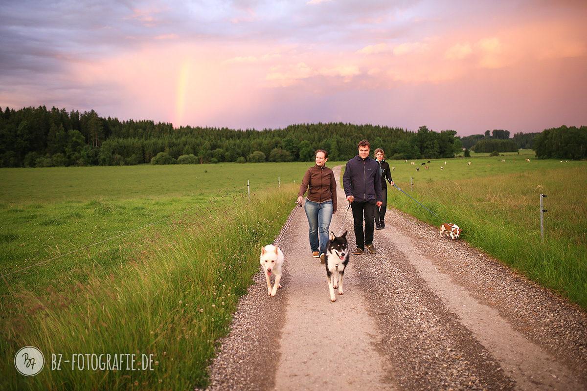 Hunde-Socialwalk-Gruppe in Aßling