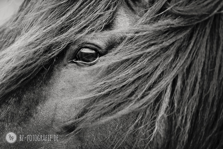 Pferdefotografie | Auge von Flygill frá Horni | BZ Fotografie