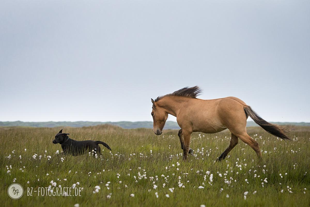 islandpferde-herde-island-034