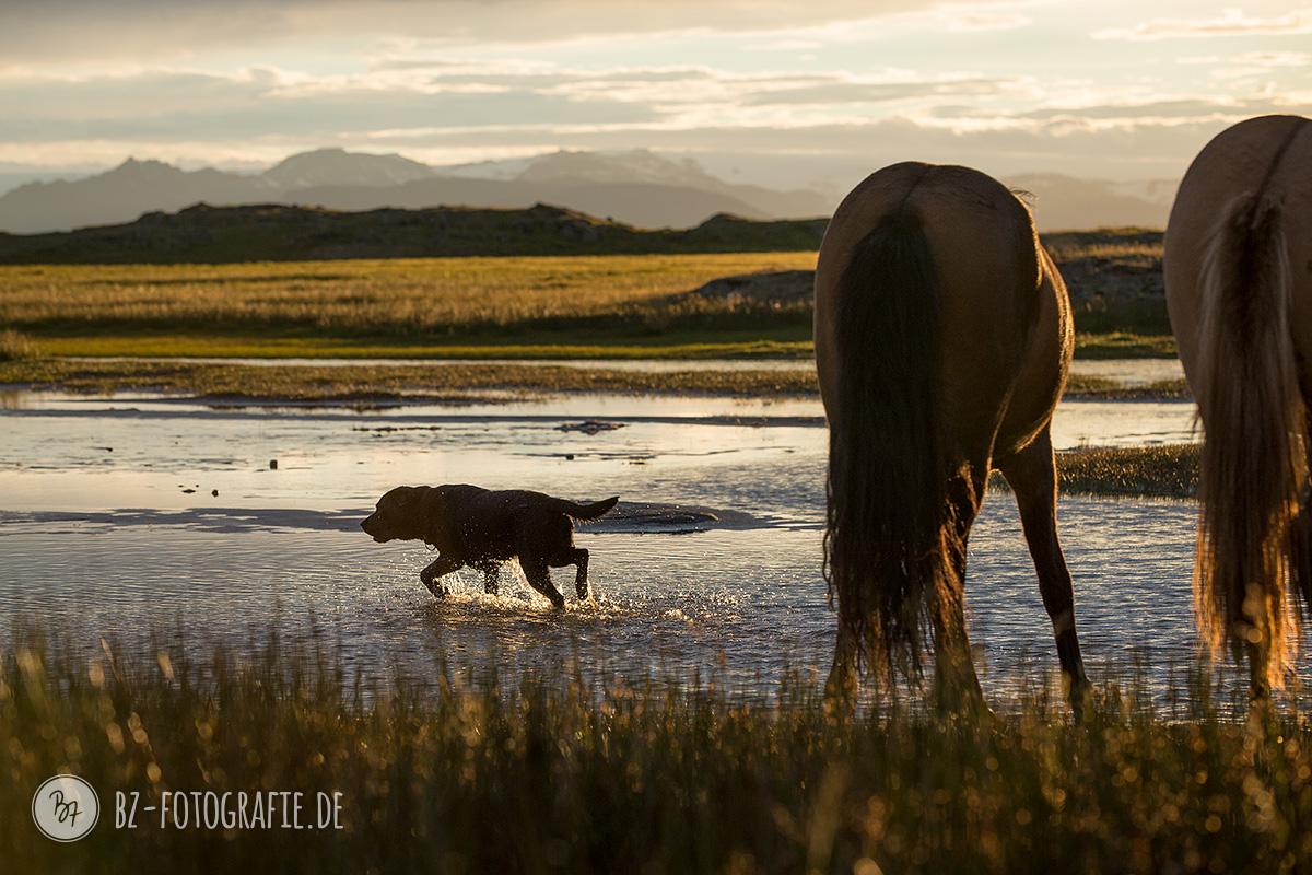 islandpferde-sonnenuntergang-wasser-015