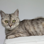 Indoor Fotografie Katze freigestellt