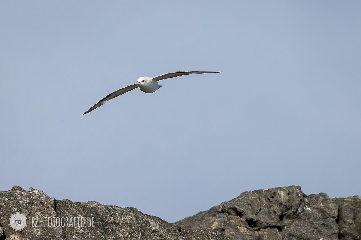 island-fotoreise-natur-012