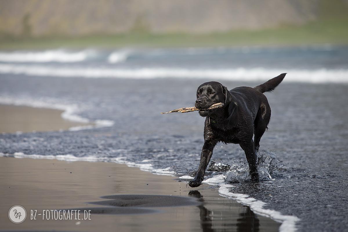 island-labrador-schwarz-005