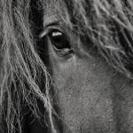 Pferdeauge von Hornsteinn frá Horni
