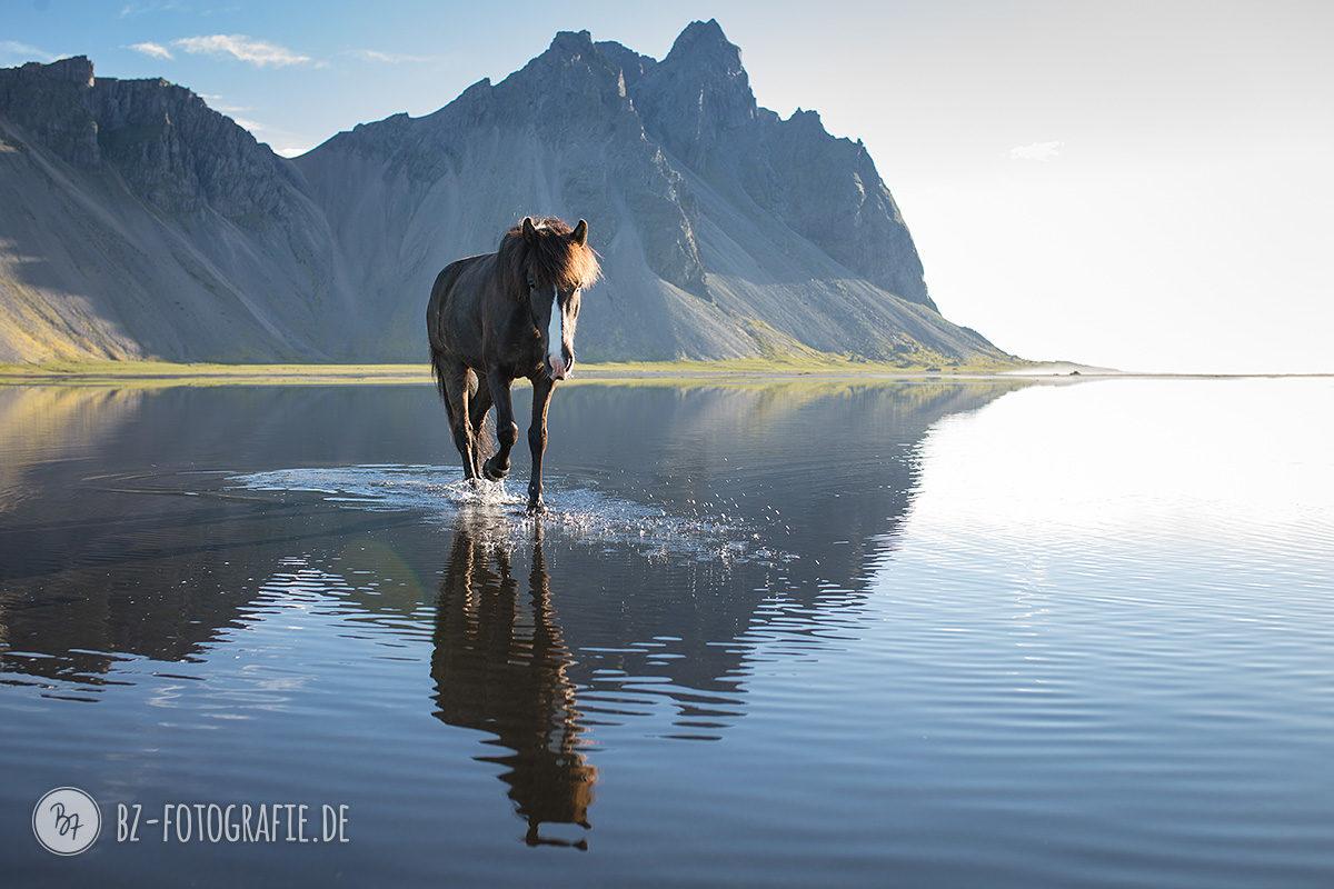 islandpferd-bergpanorama-spiegelung-001