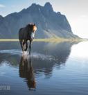 Pferdefotografie: Islandpferd vor mächtiger Bergkulisse