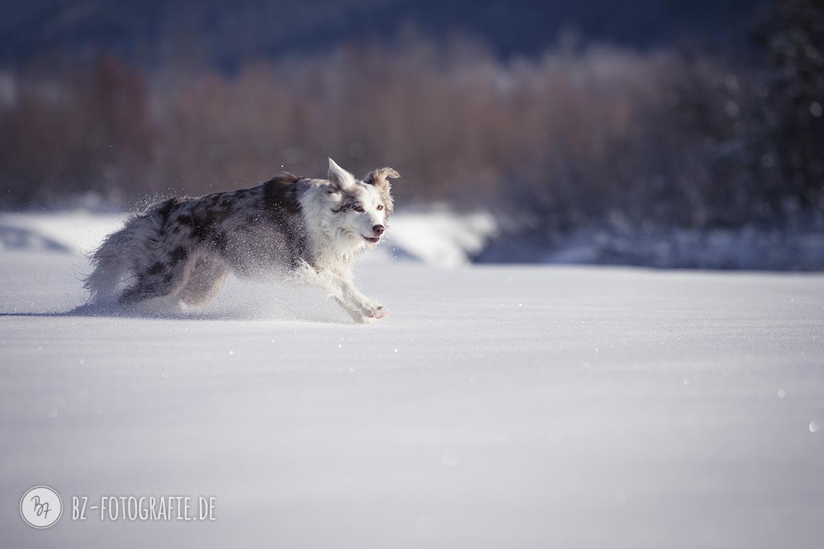 hundefotos-schnee-berge-jan17-0-1