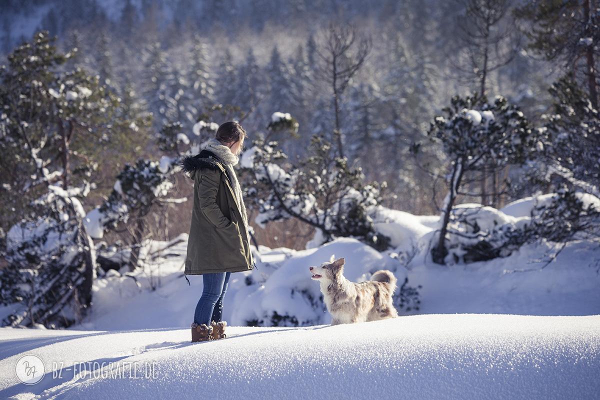 hundefotos-schnee-berge-jan17-0