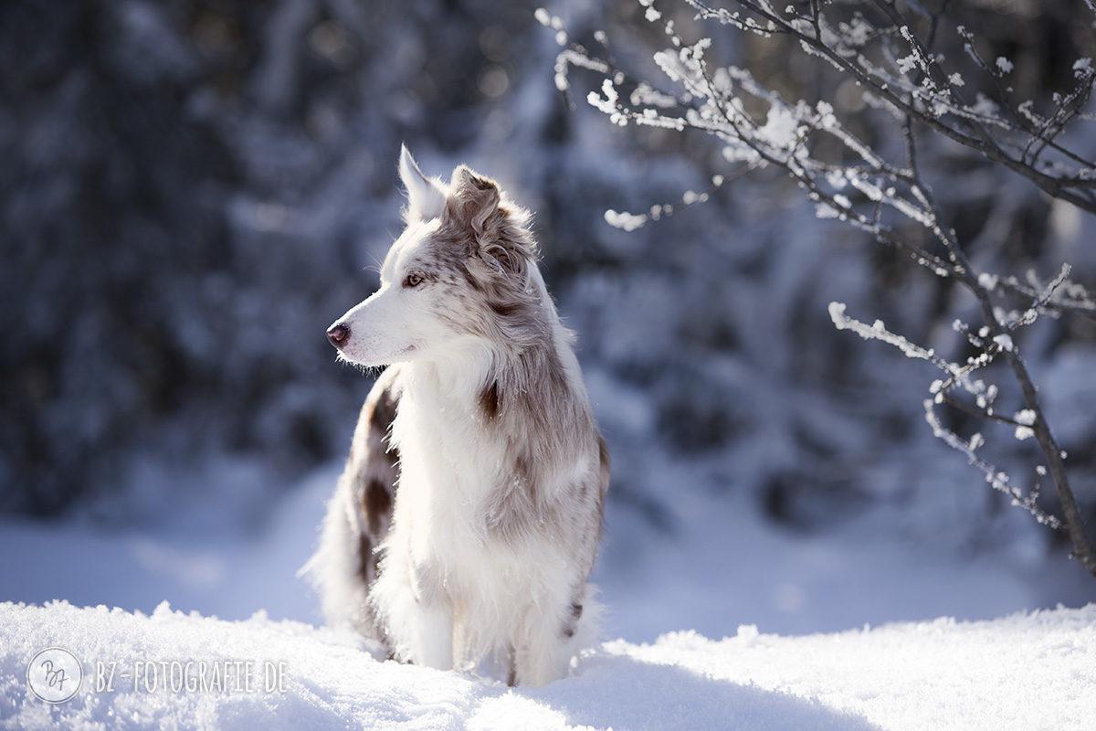 hundefotos-schnee-berge-jan17-1