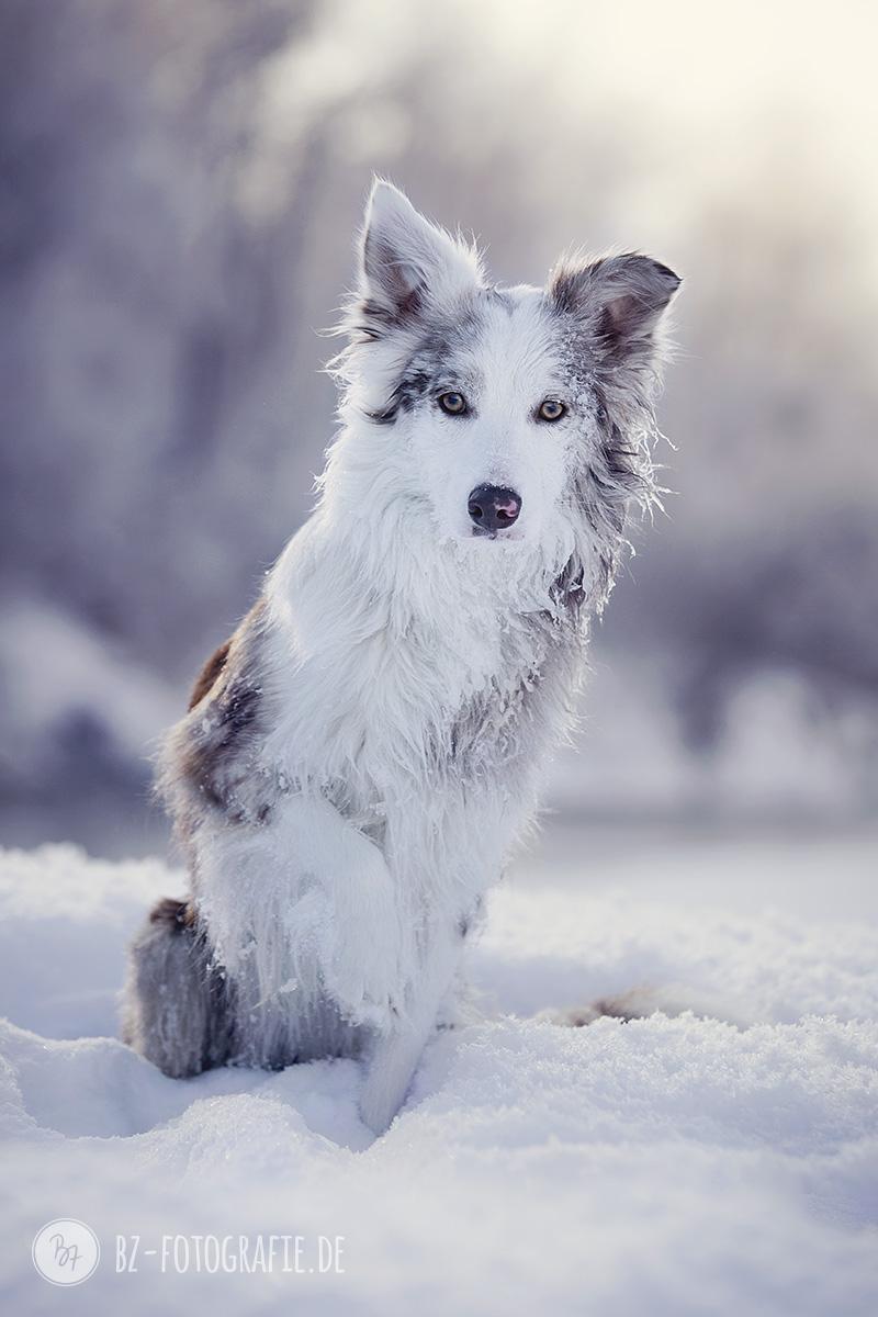 hundefotos-schnee-berge-jan17-1-2