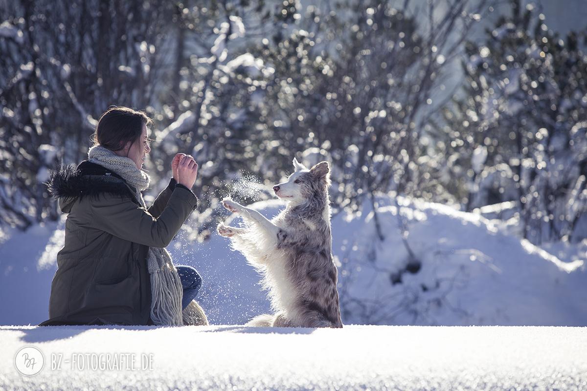 hundefotos-schnee-berge-jan17-3-1