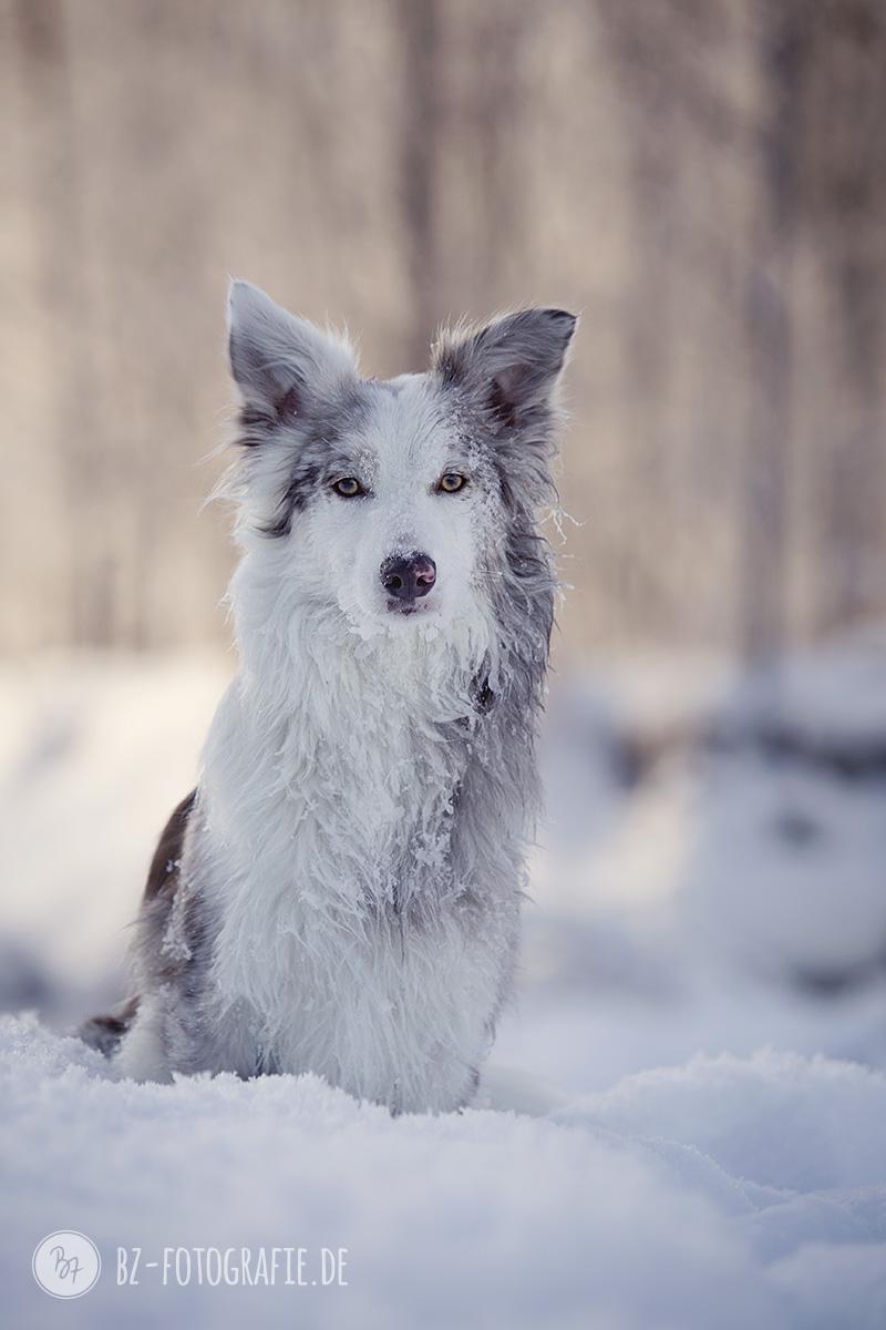 hundefotos-schnee-berge-jan17-3-2