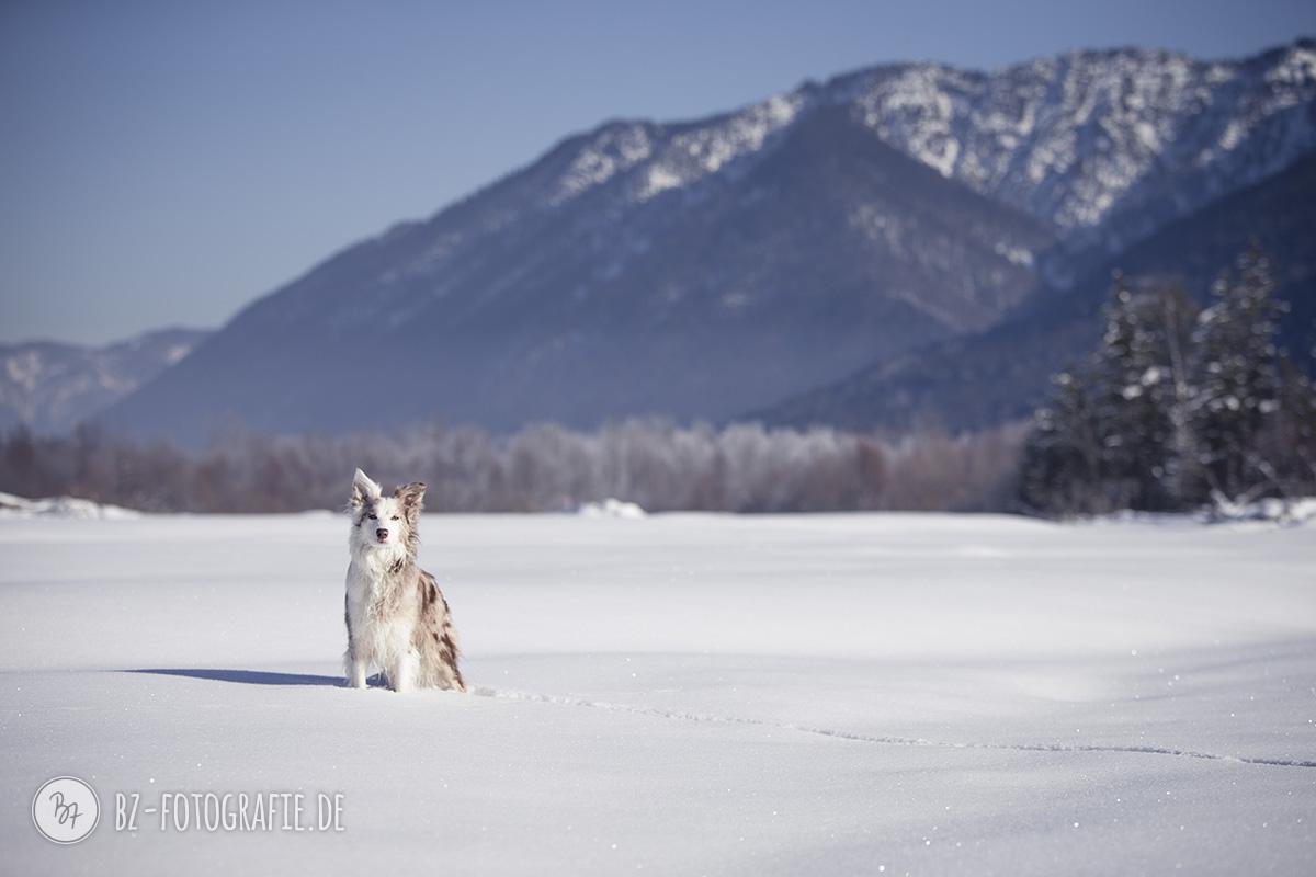 hundefotos-schnee-berge-jan17-5-1