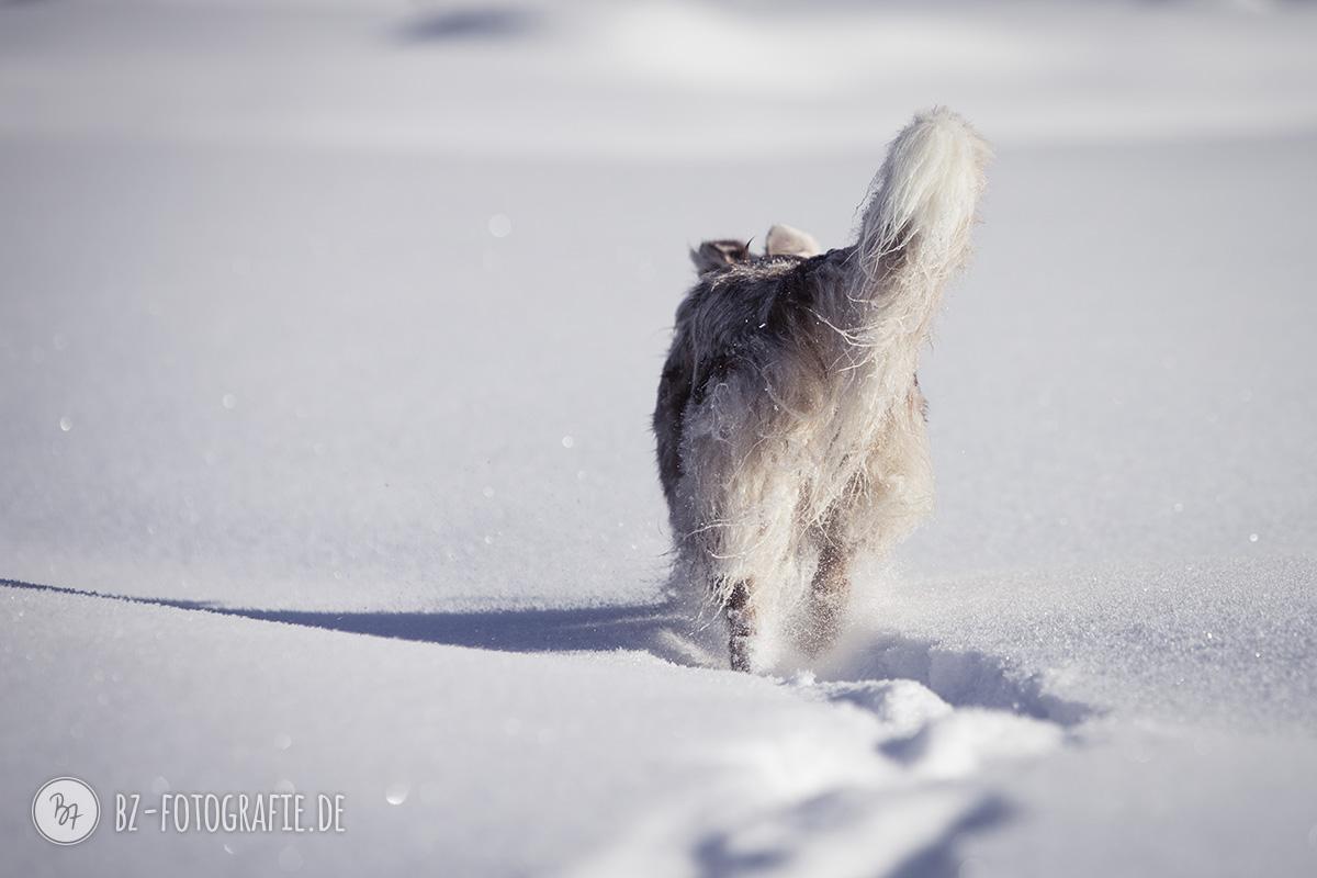 hundefotos-schnee-berge-jan17-6