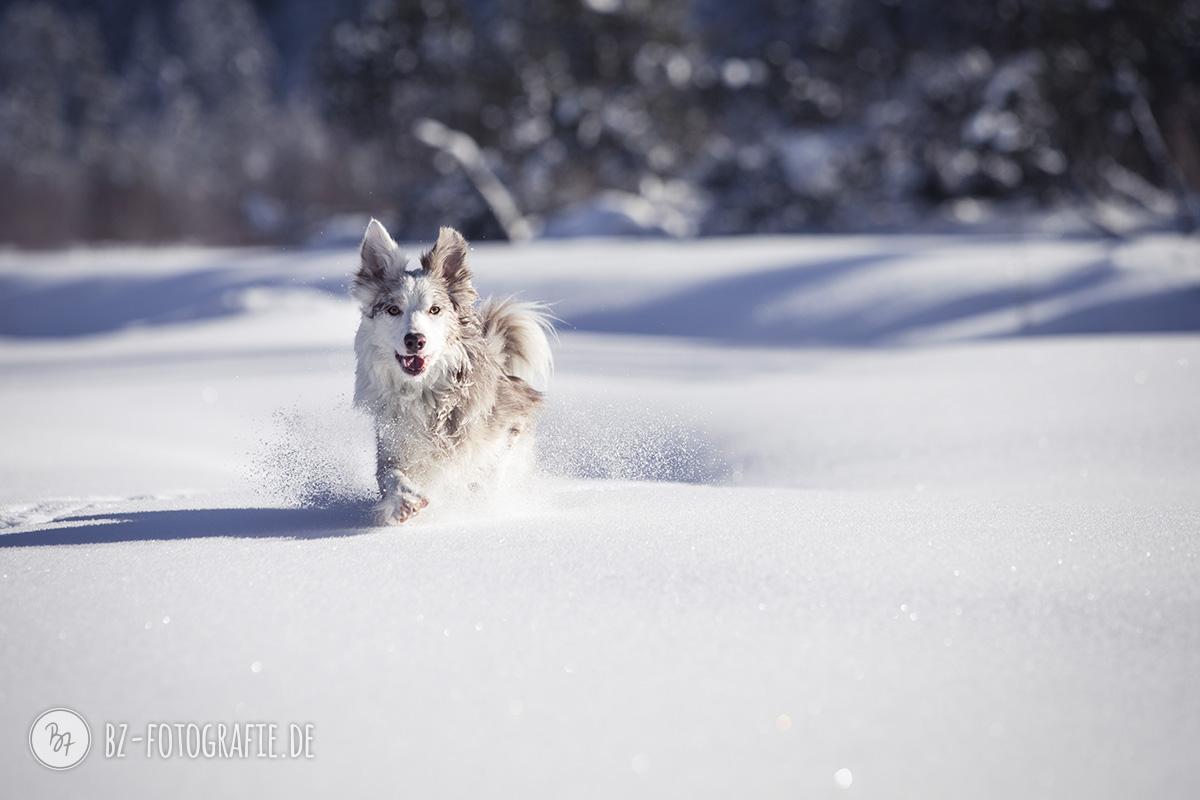 hundefotos-schnee-berge-jan17-7