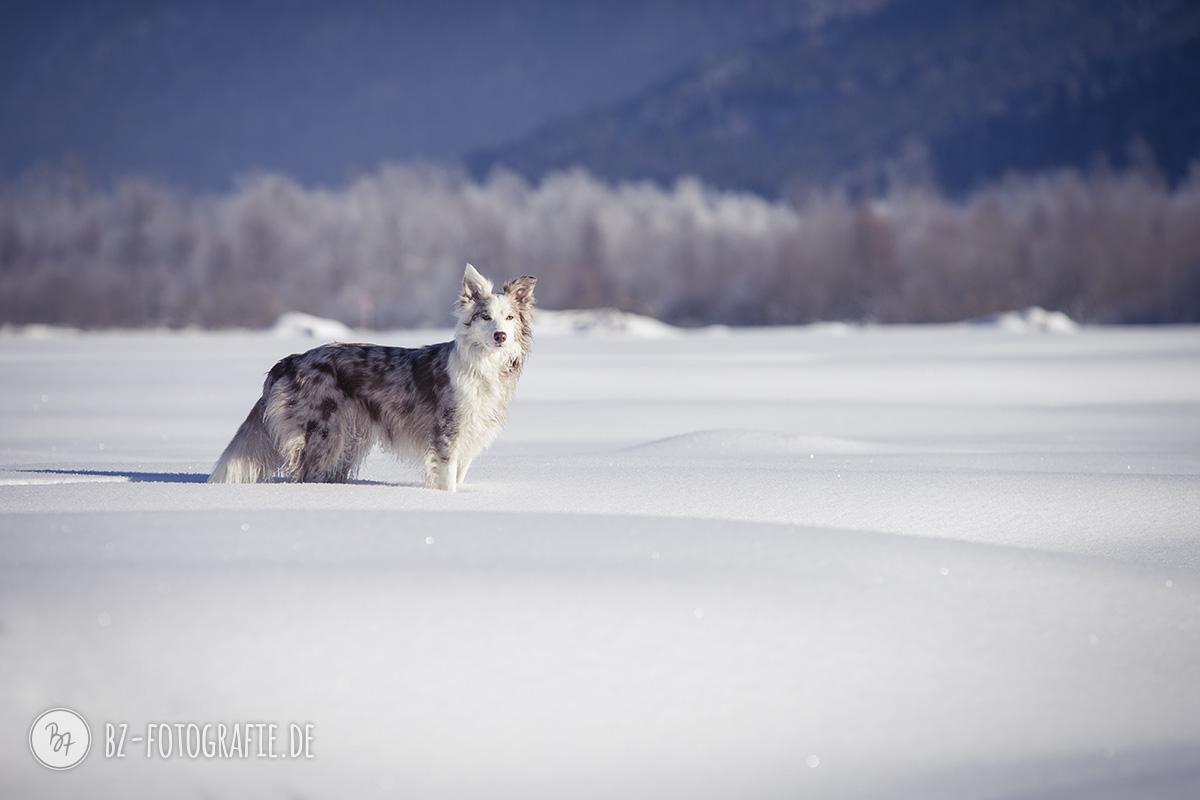 hundefotos-schnee-berge-jan17-8