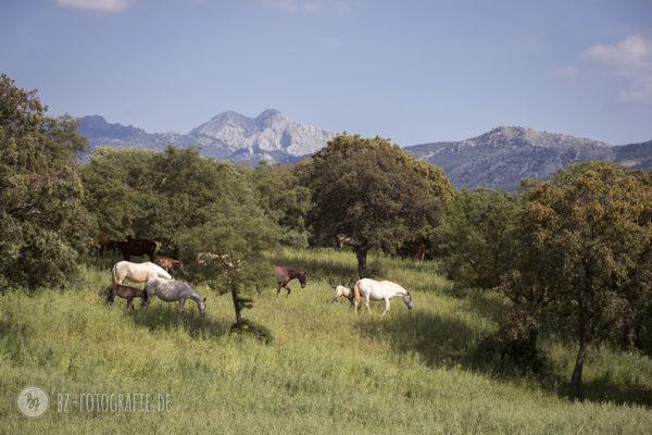 Fotoreise Andalusien Mai 2018 | Herdenleben auf Desgarrahatos