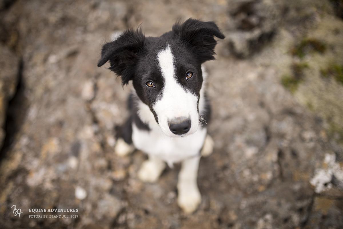 fotoreise-island-frau-pferde-hund-007