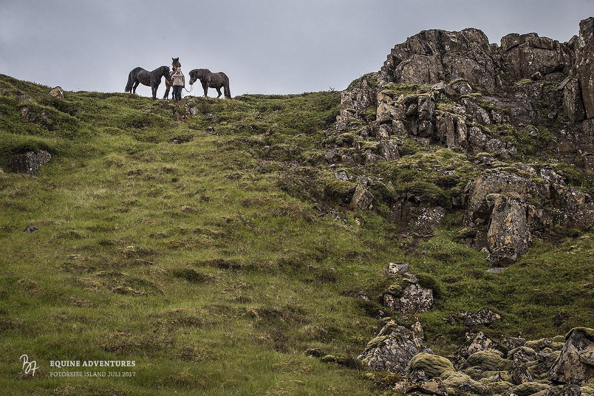 fotoreise-island-frau-pferde-hund-009