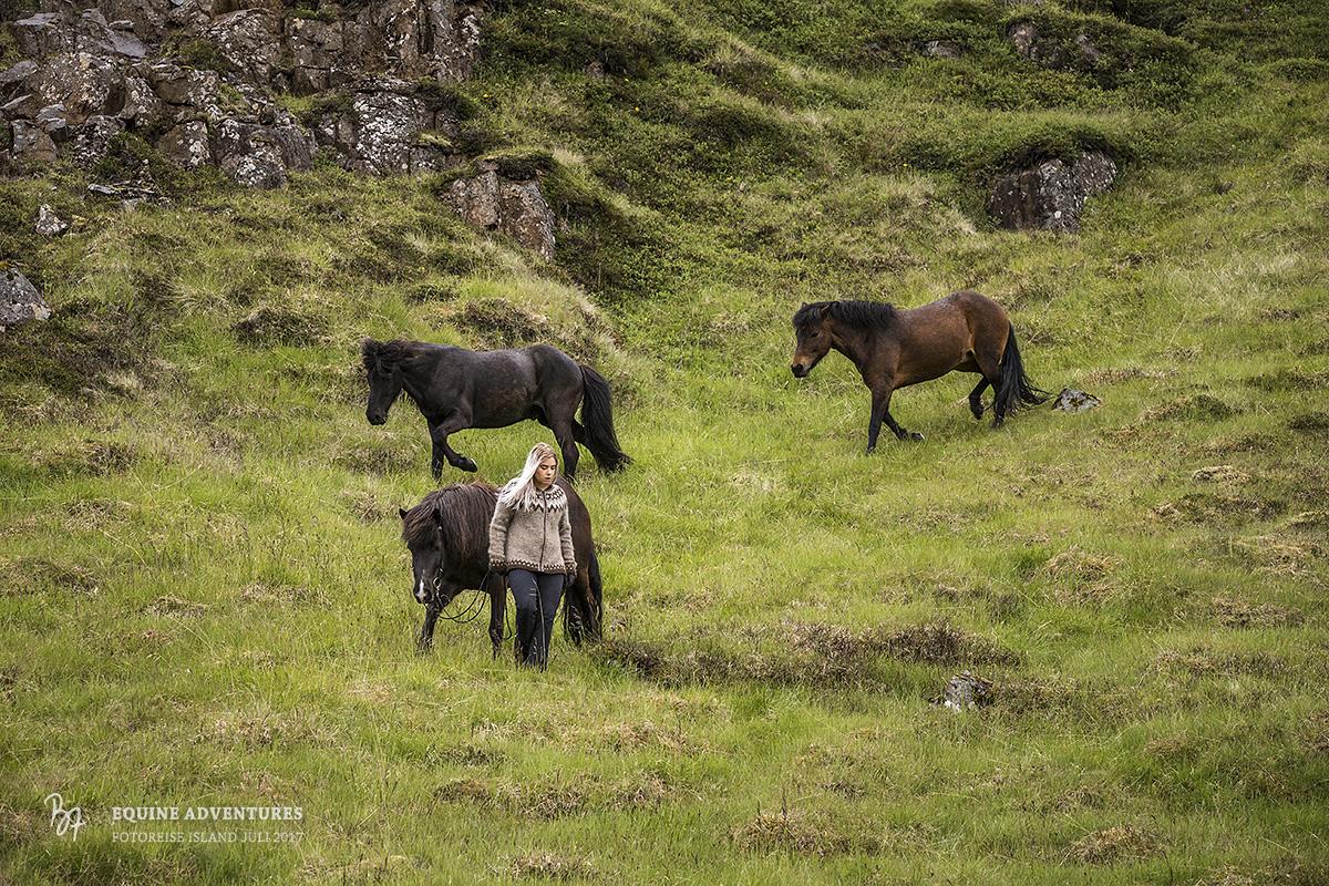 fotoreise-island-frau-pferde-hund-010