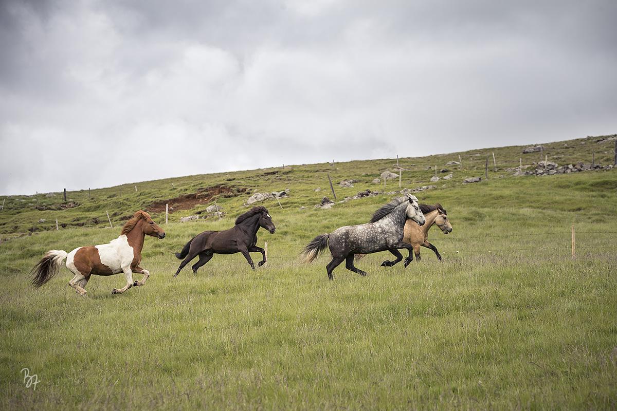 pferdefotograf-island-hofsstadir-003
