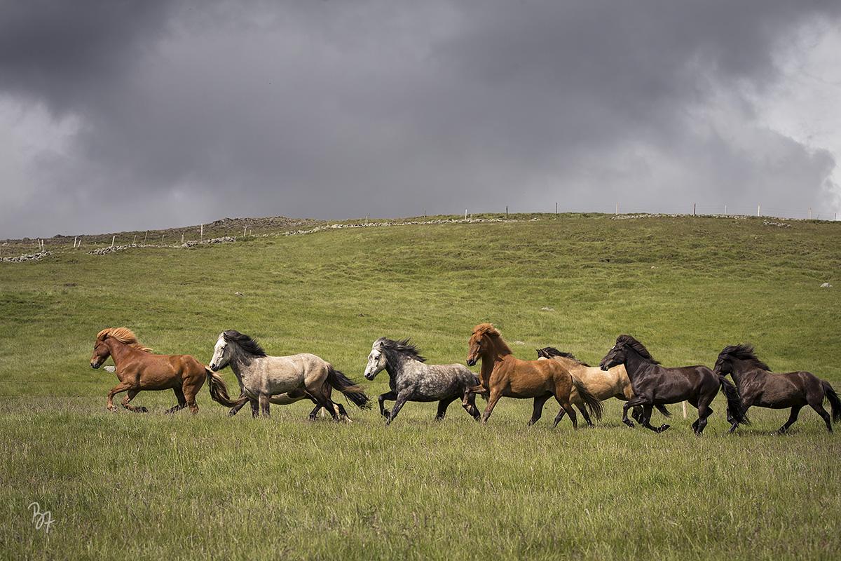 pferdefotograf-island-hofsstadir-011