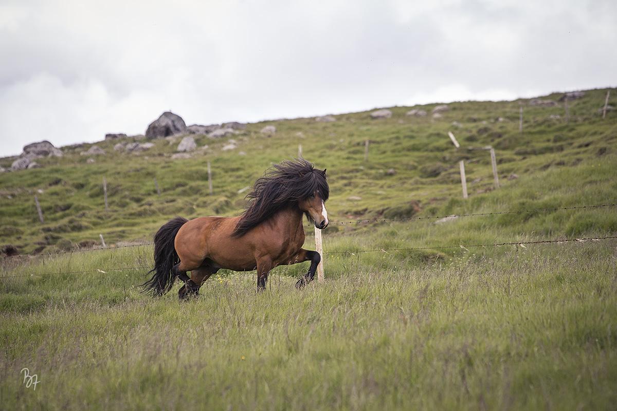 pferdefotograf-island-hofsstadir-017