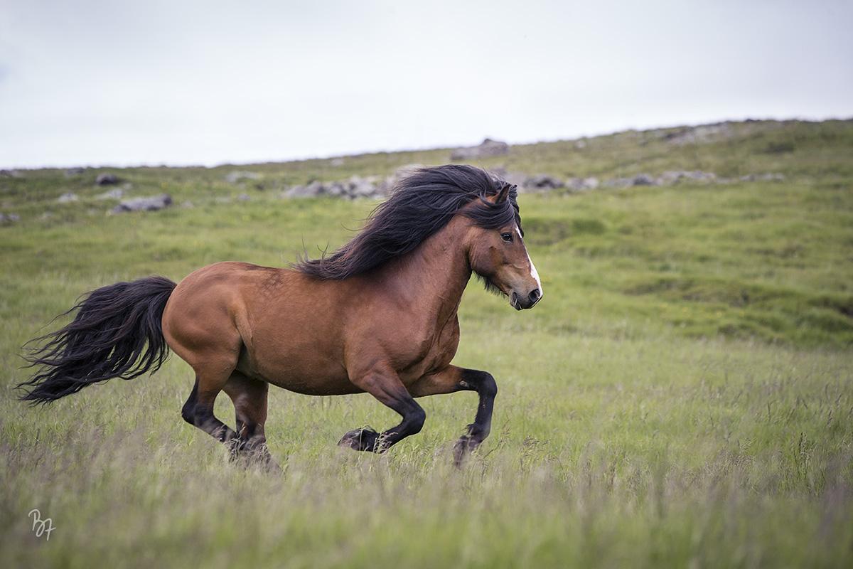 pferdefotograf-island-hofsstadir-019