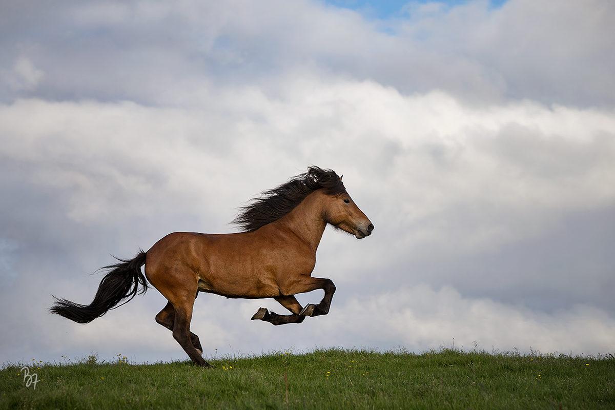 pferdefotograf-island-lundar-006