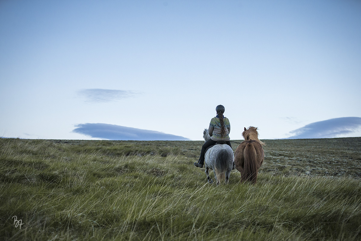 Island Nachtritt Hochland Handpferd