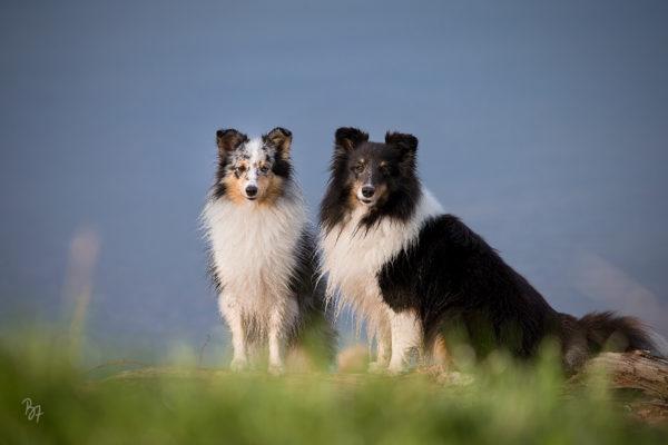 Hundefoto-Workshop im Dezember