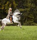 Pferdefotografie bei München: Reiterin auf majestätischem PRE-Hengst