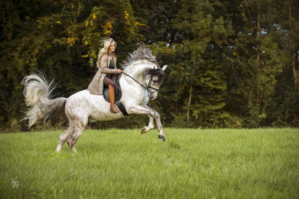 Pferdefoto-Session am Ammersee