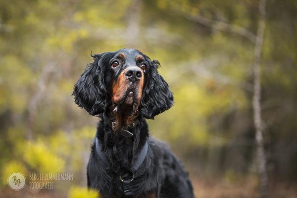 Hunde zur Vermittlung März 2018