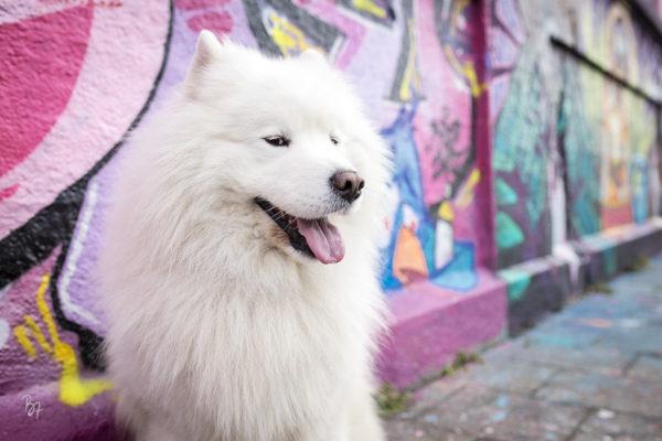 City Session Akimo | Hundefotografie in München