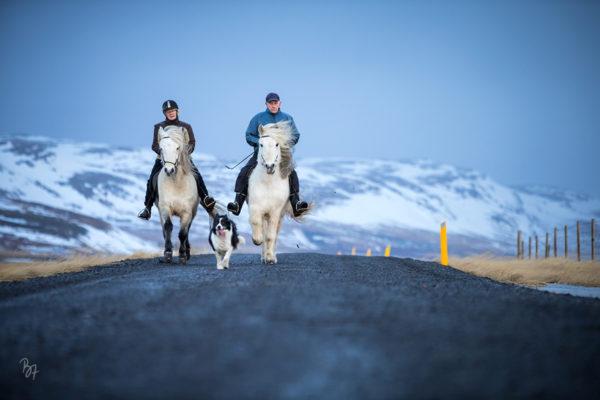 Island Februar 2018 – Lífsreynd