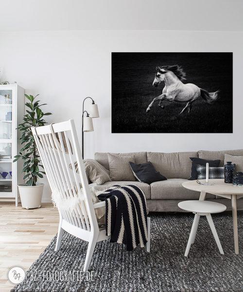 Wandbild FineArt Pferdefoto