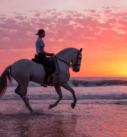 Pferdefotografie: Reiterin auf Iberer am Strand bei Sonnenuntergang