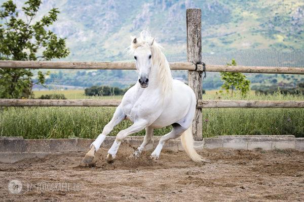 Fotoreise Andalusien Mai 2018 | Melero