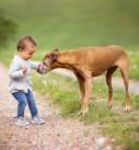 Hundefotografie bei München: Kleinkind mimt altem Hund