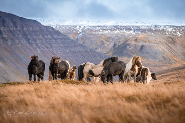 Unterwegs auf Island | Herbst-Fototour